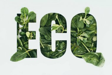 word eco made from fresh green leaves isolated on grey