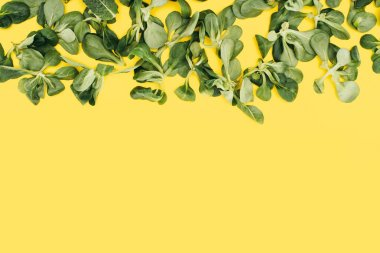 beautiful fresh green leaves isolated on yellow background
