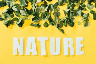beautiful green leaves and inscription nature on yellow