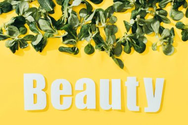 beautiful green leaves and inscription beauty on yellow