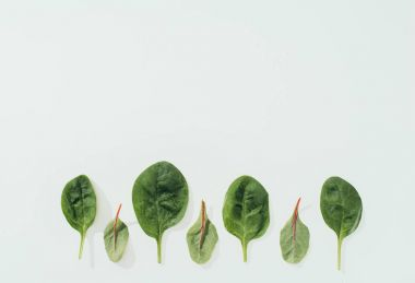 beautiful fresh green leaves in a row isolated on grey background