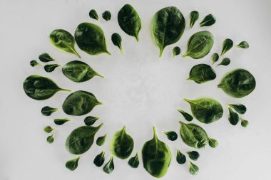 top view of round frame made from fresh green spinach leaves isolated on grey