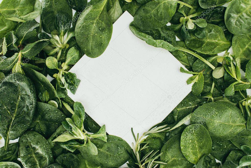 top view of blank white card and beautiful wet green leaves