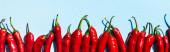 Horní pohled na syrové chilli papričky na modrém pozadí, panoramatický shot