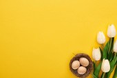 felső nézet tulipán és csirke tojás fészekben színes sárga háttér