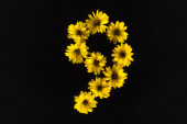 Photo top view of yellow daisies arranged in number 9 isolated on black