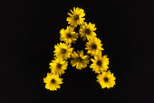 shora pohled na žluté sedmikrásky uspořádané do písmene A izolované na černé