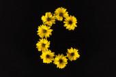 shora pohled na žluté sedmikrásky uspořádané v písmenu C izolované na černé