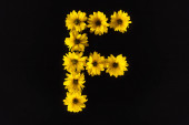 top view of yellow daisies arranged in letter F isolated on black