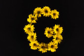 top view of yellow daisies arranged in letter G isolated on black