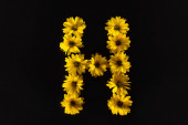 top view of yellow daisies arranged in letter H isolated on black