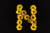 top view of yellow daisies arranged in letter N isolated on black