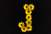 top view of yellow daisies arranged in letter J isolated on black