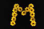 Fotografie Ansicht von gelben Gänseblümchen in Buchstabe M isoliert auf schwarz