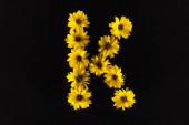 shora pohled na žluté sedmikrásky uspořádané v písmenu K izolované na černé