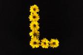 shora pohled na žluté sedmikrásky uspořádané v písmenu L izolované na černé