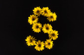 top view of yellow daisies arranged in letter S isolated on black