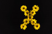 top view of yellow daisies arranged in letter X isolated on black
