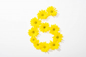 top view of yellow daisies arranged in number 6 on white background