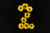 top view of yellow daisies arranged in number 2 isolated on black