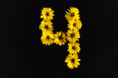 Photo top view of yellow daisies arranged in number 4 isolated on black