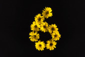 top view of yellow daisies arranged in number 6 isolated on black