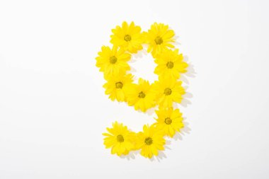 top view of yellow daisies arranged in number 9 on white background