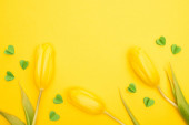 Top view of tulips and decorative green hearts on yellow background, spring concept