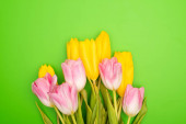 Top view of pink and yellow tulips on green background, spring concept