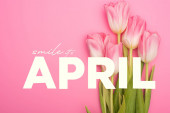 Top view of tulips on pink background, smile, it is april illustration