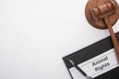 vrchní pohled na soudcovskou kladívko a pero na černém notebooku s nápisem práv zvířat na bílém pozadí