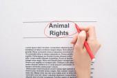 částečný pohled na ženu kroužící kolem práva zvířat nápis s červeným plstěným perem na bílém pozadí