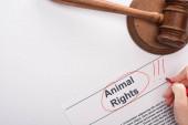 částečný pohled ženy zvýraznění práva zvířat nápis v blízkosti soudce kladívko na bílém pozadí
