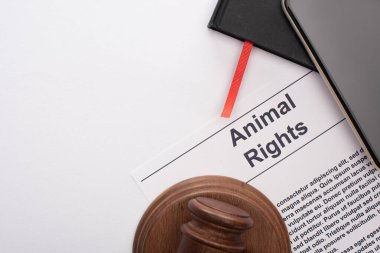 Top view of animal rights inscription, black notebooks, smartphone and judge gavel on white background stock vector
