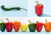 koláž čerstvé barevné papriky a jalapenos na modrém povrchu na bílém pozadí