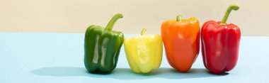 Fresh colorful bell peppers on blue surface isolated on beige, panoramic shot stock vector