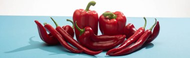 Fresh red bell peppers and chili on blue surface on white background, panoramic shot stock vector