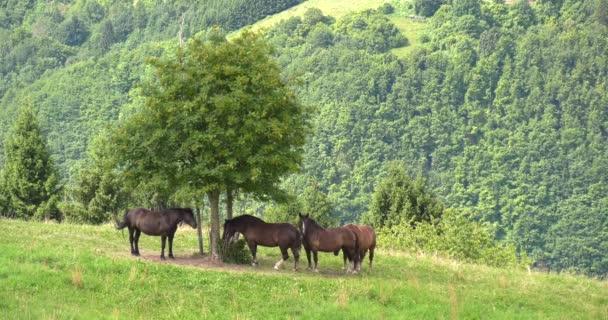 Stádo koní žere trávu na horské louce se stromy a ptáci