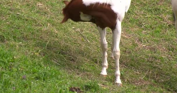 Koně jíst trávu a odpočinek
