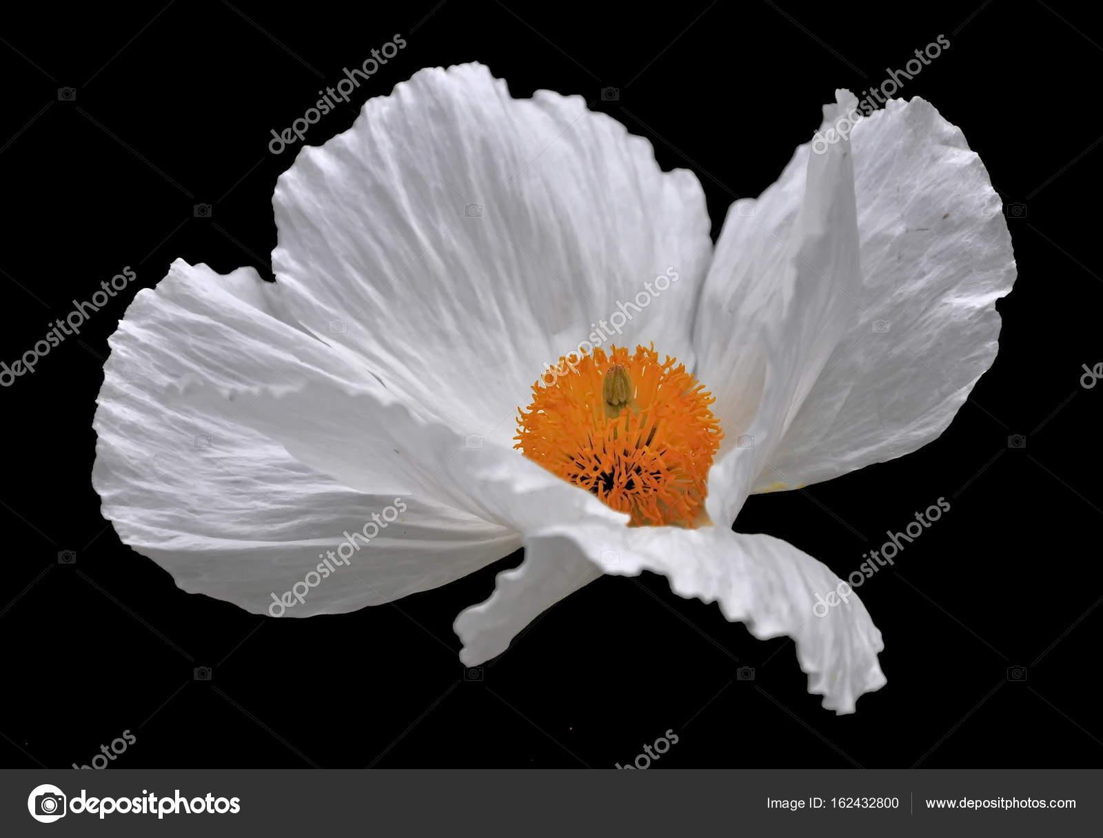 Isolated white flower stock photo sahmay 162432800 isolated white flower stock photo mightylinksfo