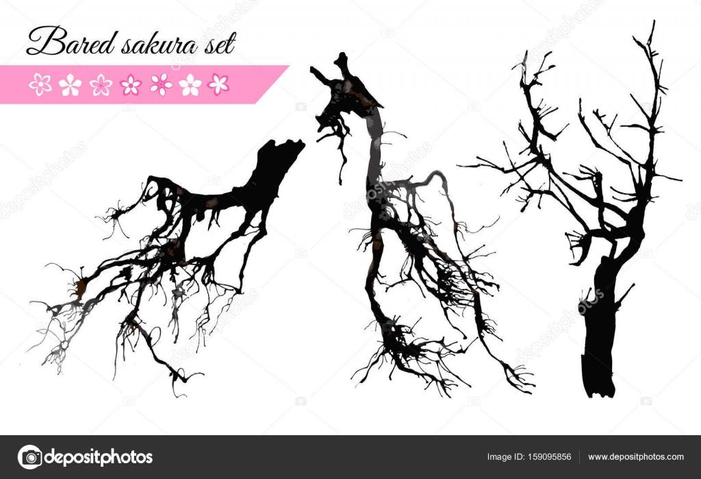Vector Conjunto De Ramas De Sakura Desnuda Vector De Stock