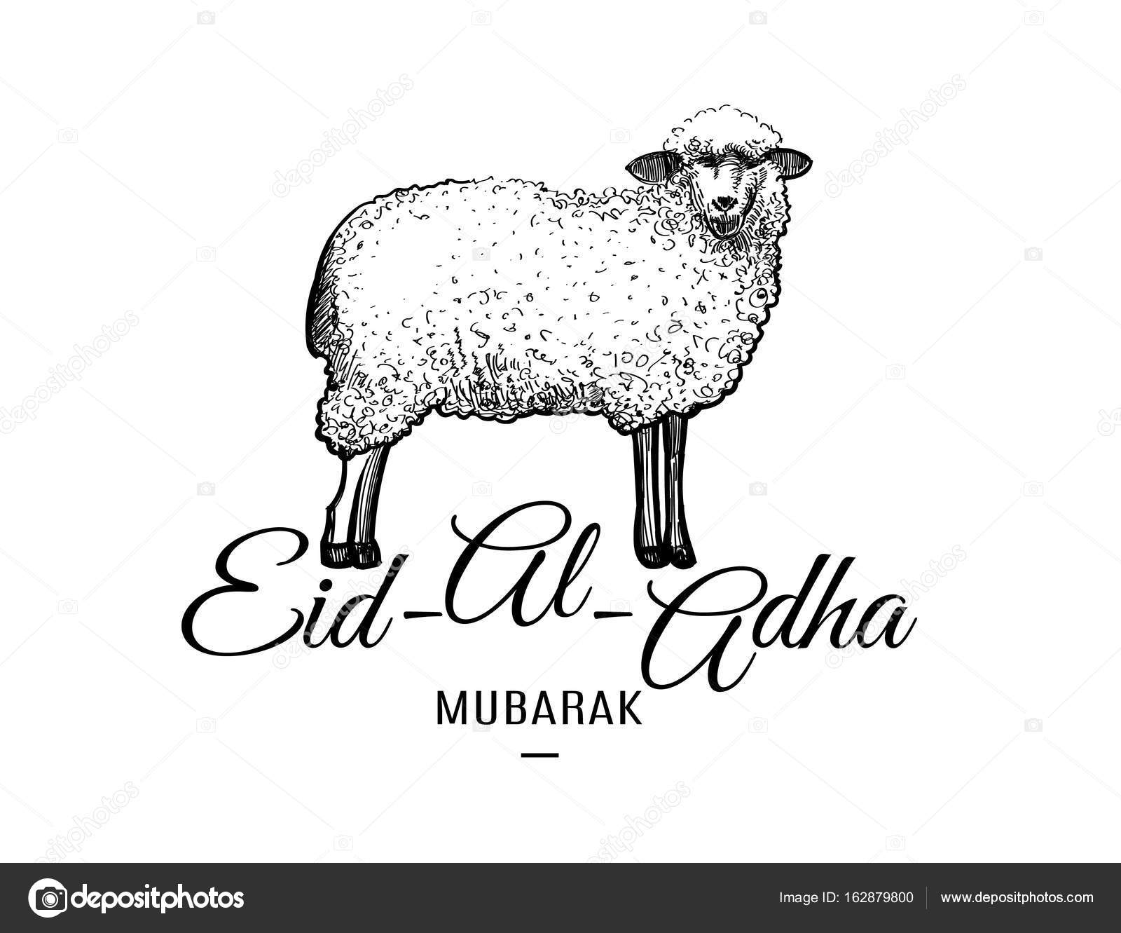 eid al adha greeting card template with hand drawn sheep isolated on