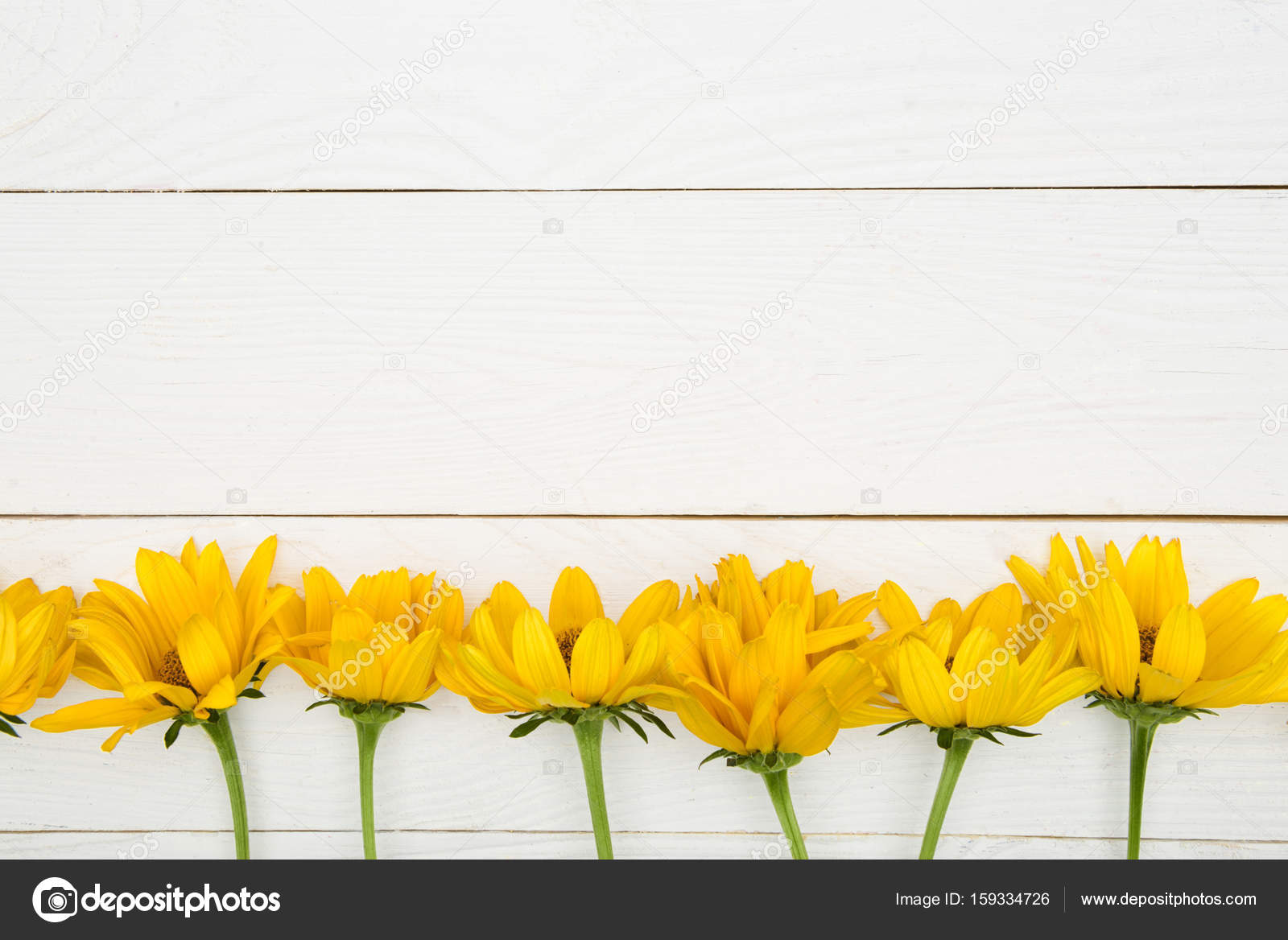 Beautiful Yellow Flowers Stock Photo Antonmatyukha 159334726