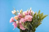 schöne rosa Blüten
