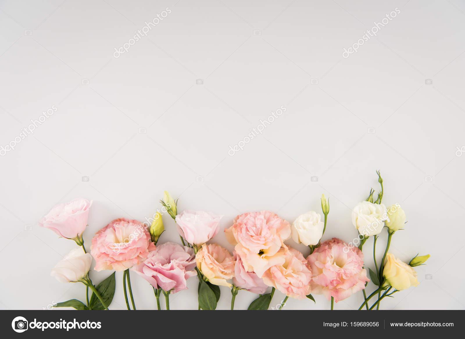 Beautiful Blooming Flowers Stock Photo Antonmatyukha 159689056