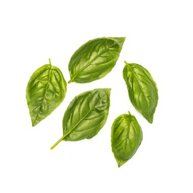 composition of basil leaves