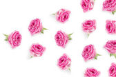 Růžové růže pozadí