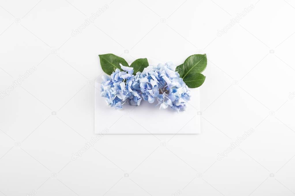 hydrangea flowers in envelope