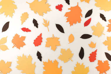 Various autumnal leaves isolated on white stock vector