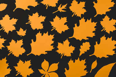 Composition of autumnal leaves isolated on black stock vector